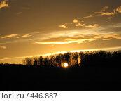 Купить «Солнце в лесу», фото № 446887, снято 28 октября 2006 г. (c) Артём Дудкин / Фотобанк Лори