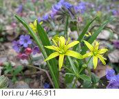 Купить «Весенние цветы», фото № 446911, снято 13 апреля 2008 г. (c) Артём Дудкин / Фотобанк Лори