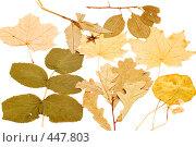 Купить «Сухие листья», фото № 447803, снято 19 января 2019 г. (c) Угоренков Александр / Фотобанк Лори
