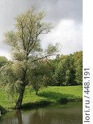 Купить «Дерево над водой», фото № 448191, снято 9 сентября 2008 г. (c) Рягузов Алексей / Фотобанк Лори