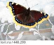 Купить «Бабочка на окне», фото № 448299, снято 23 августа 2008 г. (c) Андрей / Фотобанк Лори