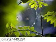 Купить «Паук на паутине», фото № 449291, снято 5 июля 2020 г. (c) Алексей Хромушин / Фотобанк Лори