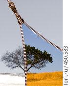 Купить «Дерево в двух сезонах», фото № 450583, снято 11 сентября 2007 г. (c) Чепко Данил / Фотобанк Лори