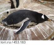 Купить «Пингвин в гнезде», фото № 453183, снято 28 августа 2008 г. (c) Юлия Бобровских / Фотобанк Лори