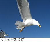 Купить «Летящая чайка», фото № 454387, снято 3 августа 2006 г. (c) Алешина Екатерина / Фотобанк Лори