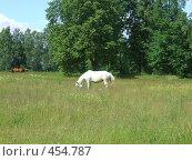 Купить «Белая лошадь», фото № 454787, снято 25 июня 2008 г. (c) виктор / Фотобанк Лори