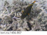 Купить «Цветная рыба около коралла на Мальдивах», фото № 456907, снято 23 ноября 2007 г. (c) Лев Сатаров / Фотобанк Лори