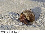 Купить «Рак-отшельник вылезает из раковины», фото № 456911, снято 23 ноября 2007 г. (c) Лев Сатаров / Фотобанк Лори