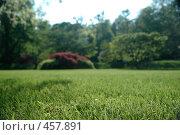 Купить «На траве», фото № 457891, снято 6 мая 2008 г. (c) А. Клипак / Фотобанк Лори
