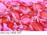 Купить «Лепестки роз,», фото № 458107, снято 3 июля 2008 г. (c) Марина / Фотобанк Лори