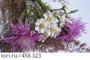 Купить «Букет из полевых цветов», фото № 458323, снято 27 июля 2008 г. (c) Заноза-Ру / Фотобанк Лори