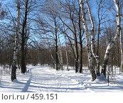 Лыжня. Стоковое фото, фотограф Александр Башкатов / Фотобанк Лори