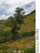 Купить «Дерево среди холмов», фото № 460083, снято 13 августа 2008 г. (c) Иван Мельниченко / Фотобанк Лори