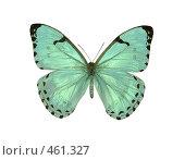 Купить «Бабочка morpho catenarius», фото № 461327, снято 14 сентября 2008 г. (c) Саломатников Владимир / Фотобанк Лори