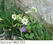 Цветы на камнях. Стоковое фото, фотограф Марина Коваленко / Фотобанк Лори