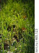 Купить «Трава в лесу», фото № 465123, снято 6 сентября 2008 г. (c) Сергей Пестерев / Фотобанк Лори