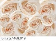 Купить «Белые розы», иллюстрация № 468019 (c) Losevsky Pavel / Фотобанк Лори