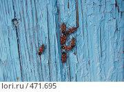Купить «Собрание», фото № 471695, снято 19 апреля 2008 г. (c) Анастасия Gorkaia / Фотобанк Лори