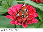 Бабочка на цветке. Стоковое фото, фотограф Анна Дегтярёва / Фотобанк Лори