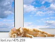 Купить «Кот на подоконнике», фото № 475259, снято 21 сентября 2008 г. (c) Михаил Котов / Фотобанк Лори