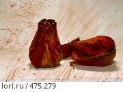 Мертвые розы. Стоковая иллюстрация, иллюстратор Бурнос Андрей / Фотобанк Лори