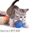 Купить «Котенок играет с клубками», фото № 477547, снято 20 сентября 2008 г. (c) Cветлана Гладкова / Фотобанк Лори