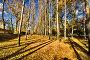 Золотой лес, фото № 481811, снято 2 октября 2007 г. (c) Валерия Потапова / Фотобанк Лори