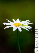Купить «Гусеница на ромашке», фото № 481819, снято 8 августа 2008 г. (c) Валерия Потапова / Фотобанк Лори