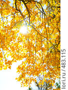 Купить «Осенний пейзаж», фото № 483115, снято 27 сентября 2008 г. (c) Валентин Мосичев / Фотобанк Лори