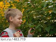 Купить «Ароматный цветок», фото № 483719, снято 30 августа 2008 г. (c) Абышев А.А. / Фотобанк Лори