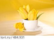 Купить «Желтые тюльпаны», фото № 484931, снято 10 мая 2005 г. (c) Кравецкий Геннадий / Фотобанк Лори