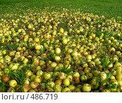 Купить «Яблоки на траве», эксклюзивное фото № 486719, снято 29 сентября 2008 г. (c) lana1501 / Фотобанк Лори