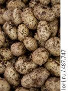 Картофель молодой. Стоковое фото, фотограф Ярослав Никитин / Фотобанк Лори