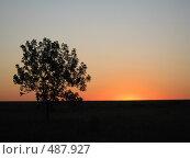 Купить «Закат у одинокого дерева», фото № 487927, снято 10 июля 2007 г. (c) Артём Дудкин / Фотобанк Лори