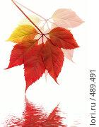 Купить «Осенние листья», фото № 489491, снято 19 сентября 2018 г. (c) ElenArt / Фотобанк Лори