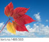 Купить «Небо и лист винограда», фото № 489503, снято 19 сентября 2018 г. (c) ElenArt / Фотобанк Лори