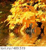 Купить «Золотая осень», фото № 489519, снято 19 сентября 2018 г. (c) ElenArt / Фотобанк Лори