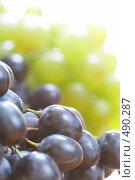 Купить «Ягоды винограда», фото № 490287, снято 25 сентября 2008 г. (c) Dzianis Miraniuk / Фотобанк Лори