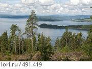 Сосновый лес. Шхеры. (2008 год). Стоковое фото, фотограф Ярослав Никитин / Фотобанк Лори