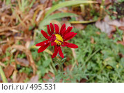 Осенний цветок. Стоковое фото, фотограф Tabashnikov Alexei / Фотобанк Лори