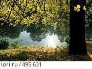 Купить «Золотая осень на Елагином острове», эксклюзивное фото № 495631, снято 22 сентября 2008 г. (c) Ольга Визави / Фотобанк Лори