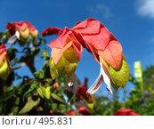 Купить «Экзотические цветы о.Майнау», фото № 495831, снято 10 августа 2008 г. (c) Пичугина Виктория / Фотобанк Лори