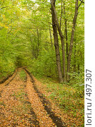 Купить «Лесная дорога осенью. Буковый лес.», фото № 497307, снято 6 октября 2008 г. (c) Федор Королевский / Фотобанк Лори