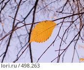 Купить «Осенний лист на фоне неба», фото № 498263, снято 5 октября 2008 г. (c) Юрий Винокуров / Фотобанк Лори