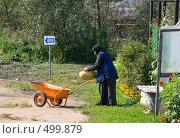 Купить «Старушка в огороде монастыря», фото № 499879, снято 6 сентября 2008 г. (c) Ярослава Синицына / Фотобанк Лори