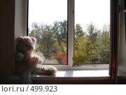 Купить «Мишка на окне», фото № 499923, снято 5 октября 2008 г. (c) Ольга Батракова / Фотобанк Лори