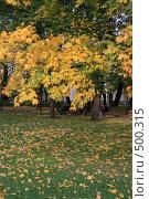 Купить «Осень. Михайловский сад. Санкт-Петербург», фото № 500315, снято 4 октября 2008 г. (c) Александр Секретарев / Фотобанк Лори
