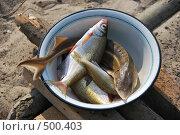 Речная рыба в металлической миске. Стоковое фото, фотограф Игорь Гришаев / Фотобанк Лори