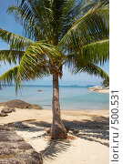 Купить «Пальма на берегу», фото № 500531, снято 18 марта 2008 г. (c) Алексей Корсаков / Фотобанк Лори