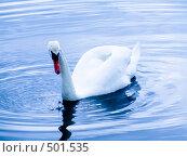 Белый лебедь на воде. Стоковое фото, фотограф Александр Давыдов / Фотобанк Лори